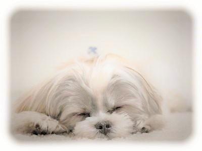 sleep_dog.jpg