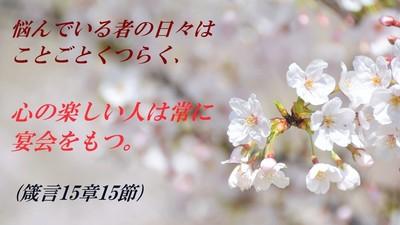 cherry2018-e6a48.jpg