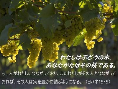 grapes201811.jpg