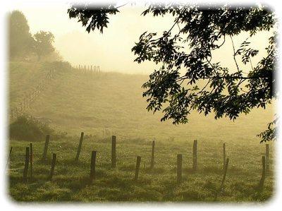 morning-mist202010.jpg